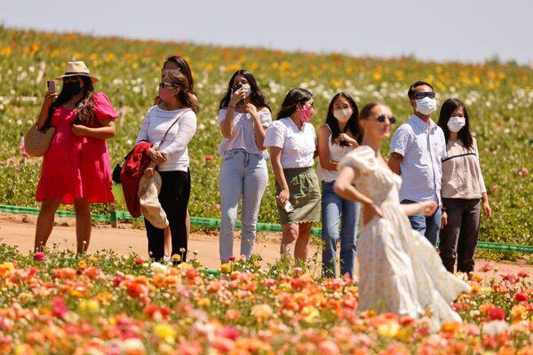 Цветущие поля лютиков открылись для посетителей в Калифорнии - Sputnik Беларусь