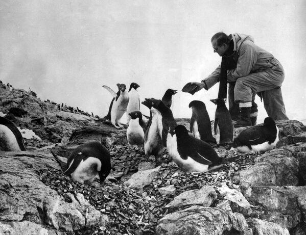 Герцог Эдинбургский кормит пингвинов во время посещения Антарктики 8 февраля 1957 года - Sputnik Беларусь