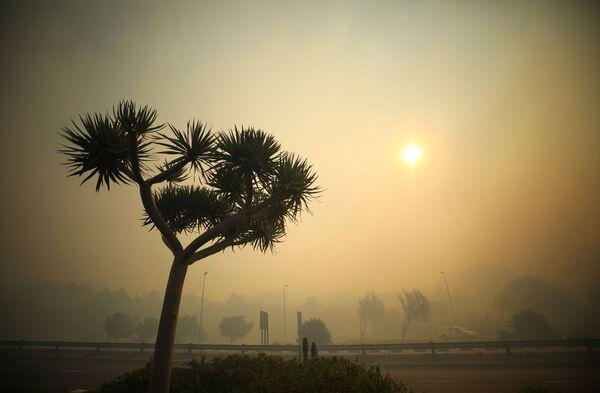 Пожарные пытаются сдержать лесной пожар в Кейптауне - Sputnik Беларусь