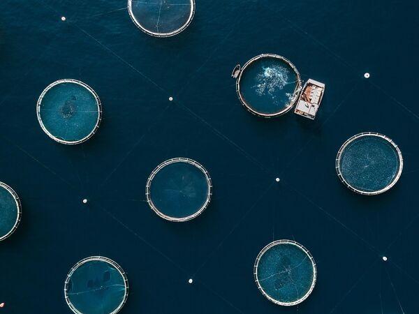 К 2050 году миру необходимо производить на 70% больше продуктов питания, чтобы удовлетворить потребности ожидаемого 9-миллиардного населения мира. Это означает, что пищевая промышленность будущего должна быть более производительной, чем когда-либо. Аквакультура - это самая быстроразвивающаяся пищевая промышленность в мире. А рыбные фермы - эффективная альтернатива выращиванию большого количества рыбы вместо дикого рыболовства. С другой стороны, их часто критикуют за влияние, которое они оказывают на окружающую среду, например, загрязнение выброшенными питательными веществами и фекалиями, которые оседают на морском дне, их влияние на биоразнообразие, распространение болезней и использование антибиотиков. - Sputnik Беларусь