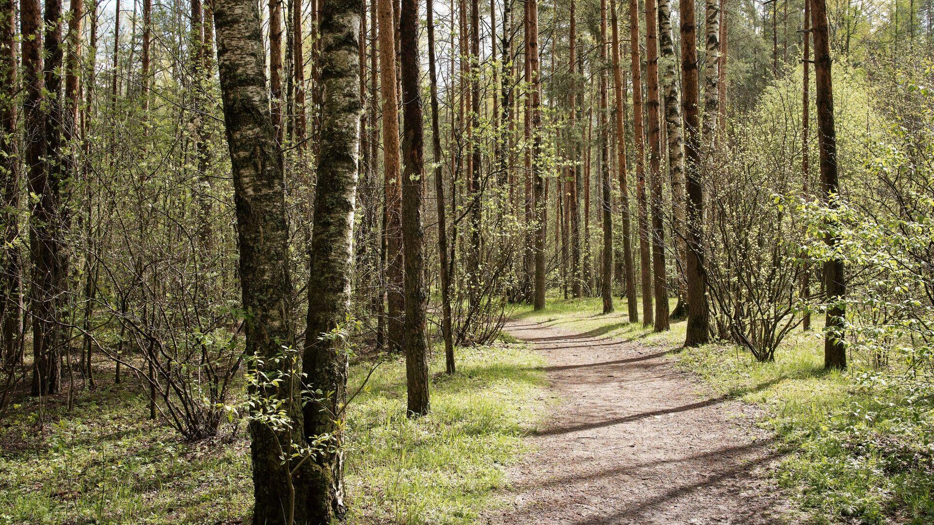 Лес весной - Sputnik Беларусь, 1920, 25.04.2021