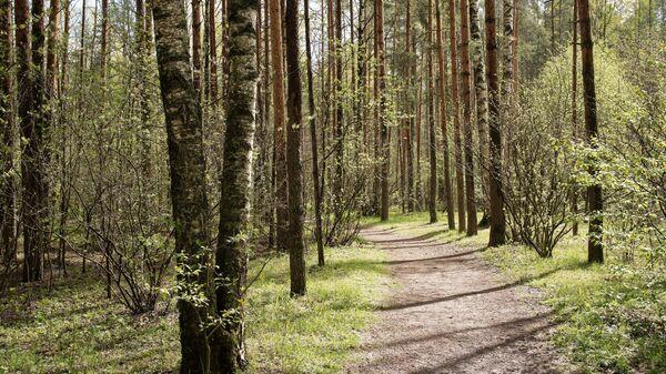 Лес весной - Sputnik Беларусь
