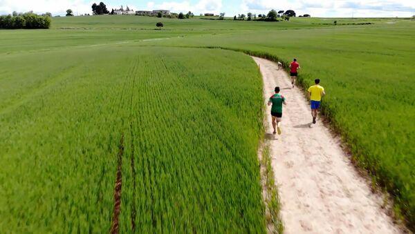 Беговая дорожка посреди пшеничного поля.Так можно было? – видео - Sputnik Беларусь