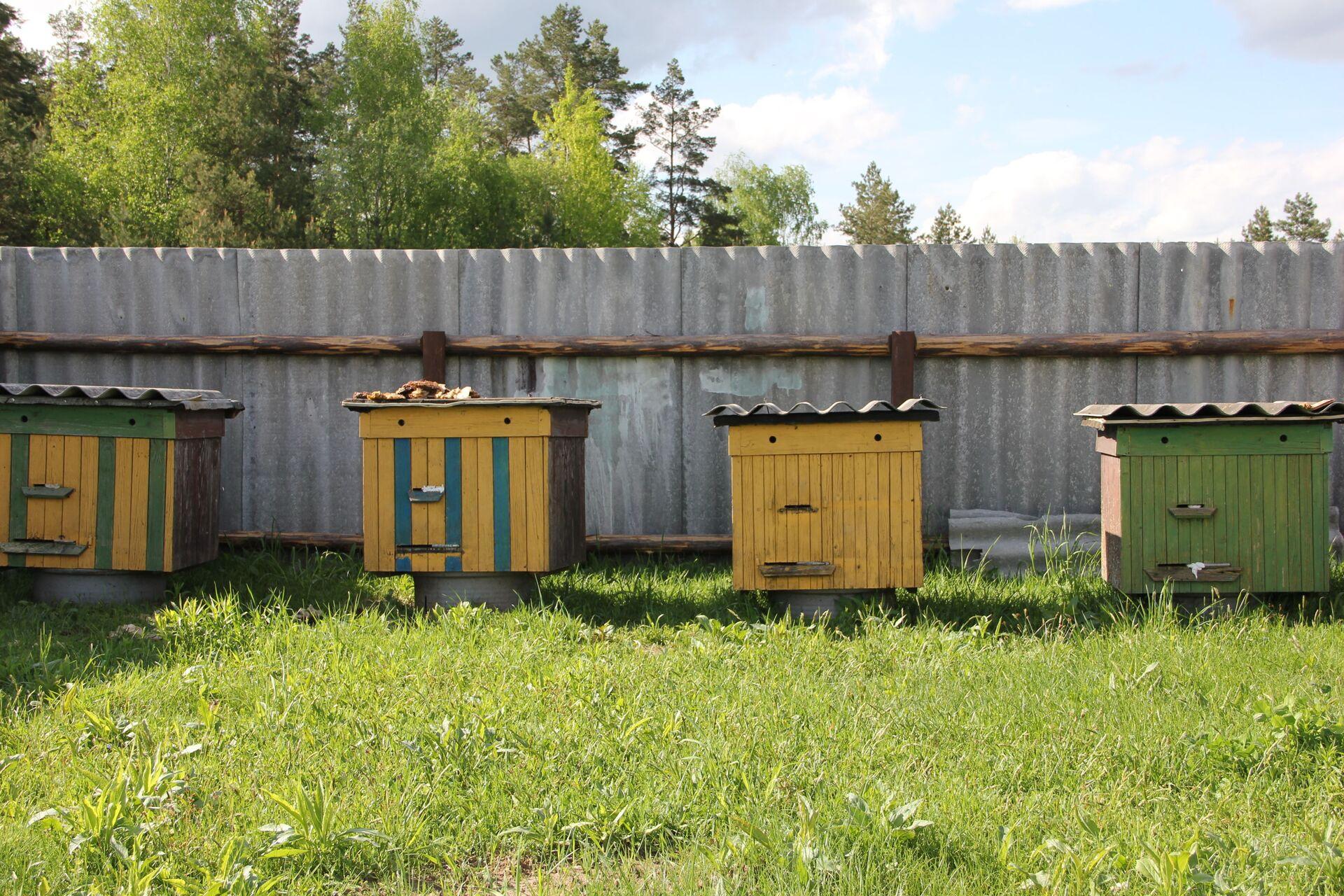Медведь не агрессивный, утверждают местные, нападает лишь на самое сладенькое - пасеку - Sputnik Беларусь, 1920, 29.06.2021