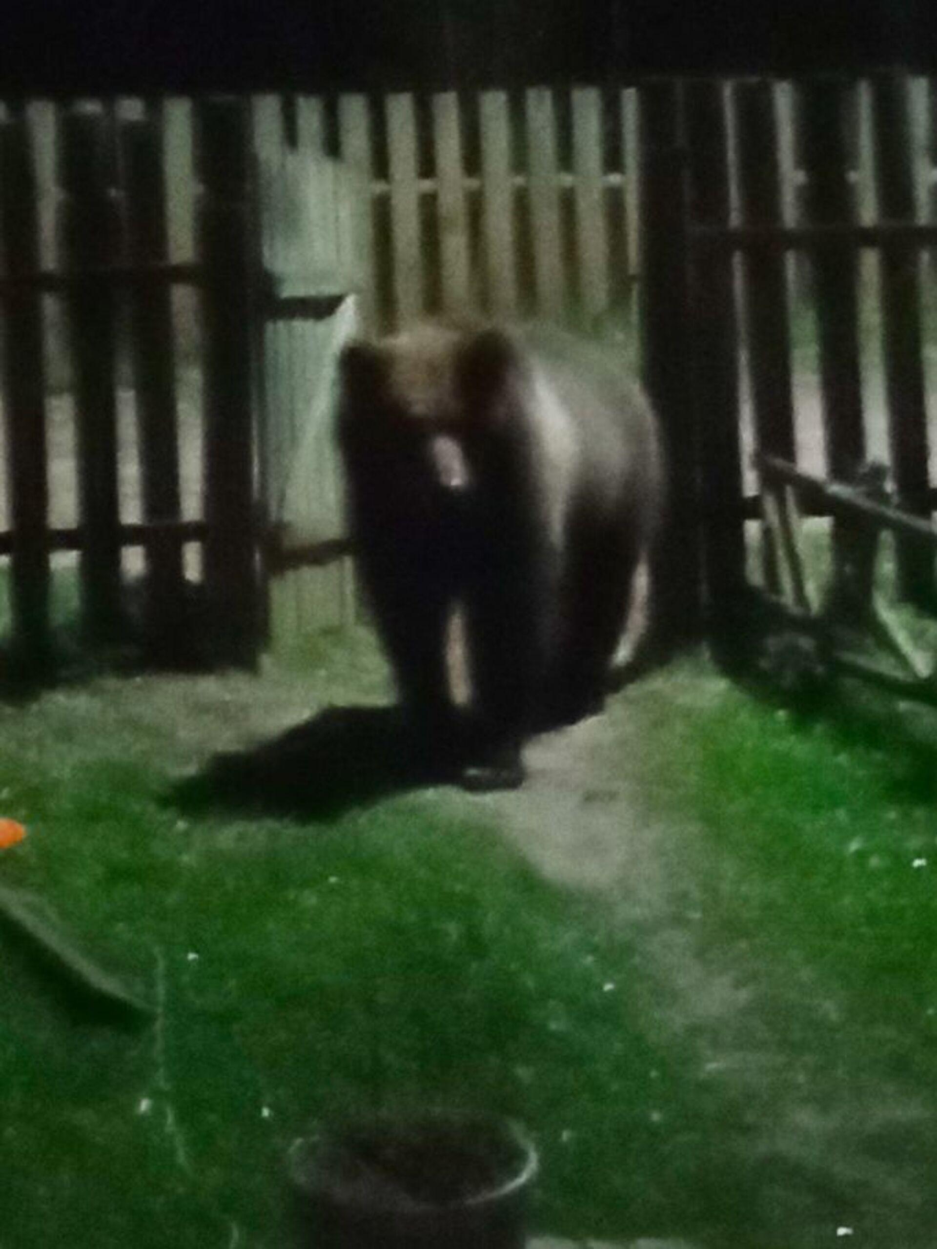 Тот самый медведь, который наводит страх на местных жителей - Sputnik Беларусь, 1920, 29.06.2021