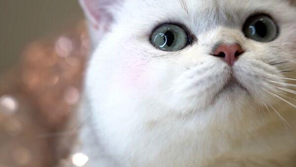 Кошка стала мадэллю рэкламы аўтамабіляў - відэа - Sputnik Беларусь