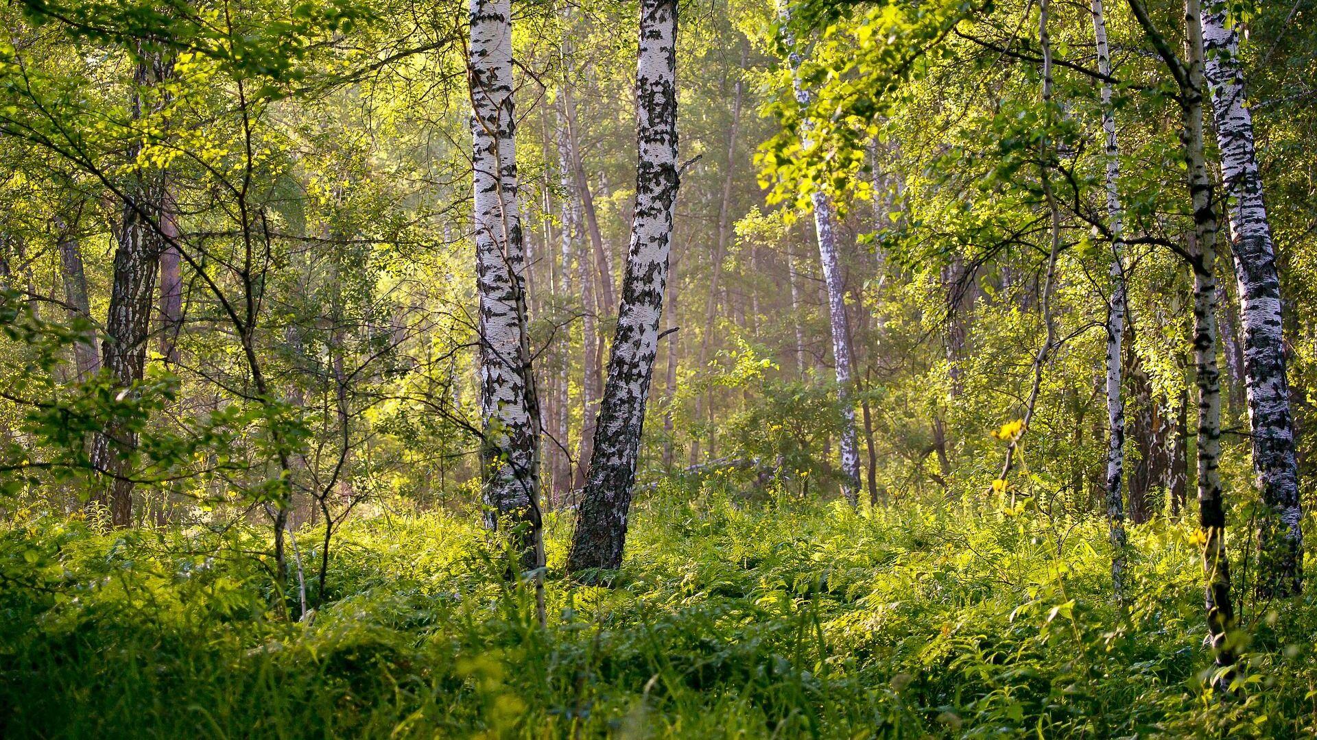 Летні лес, архіўнае фота - Sputnik Беларусь, 1920, 19.07.2021