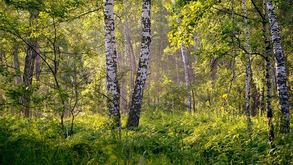 Летні лес, архіўнае фота - Sputnik Беларусь