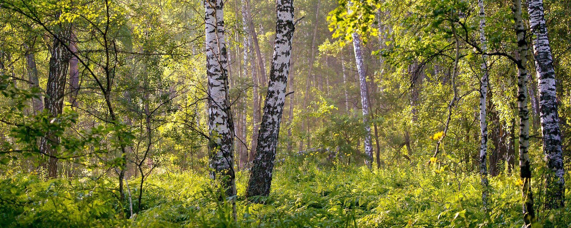 Летні лес, архіўнае фота - Sputnik Беларусь, 1920, 28.06.2021