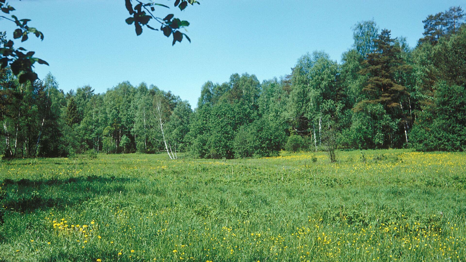 Лес, архивное фото - Sputnik Беларусь, 1920, 29.06.2021