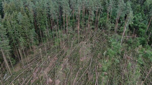 Поваленный ветром лес - Sputnik Беларусь