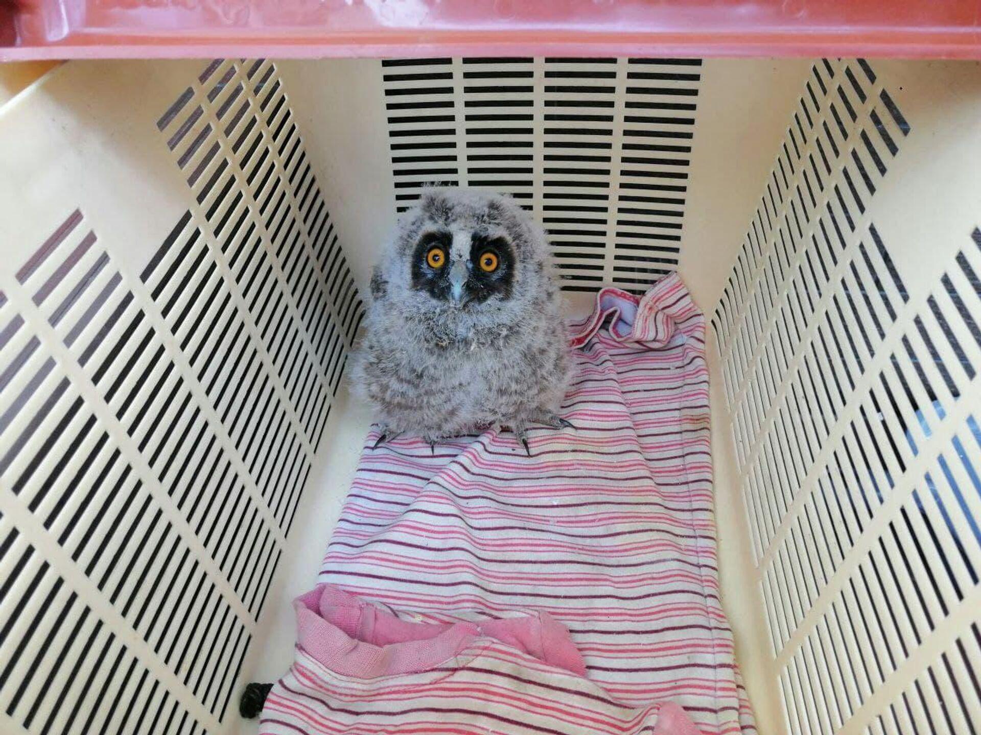За полторы недели, которые птенцы провели за пределами родного гнезда, они подросли - Sputnik Беларусь, 1920, 29.07.2021