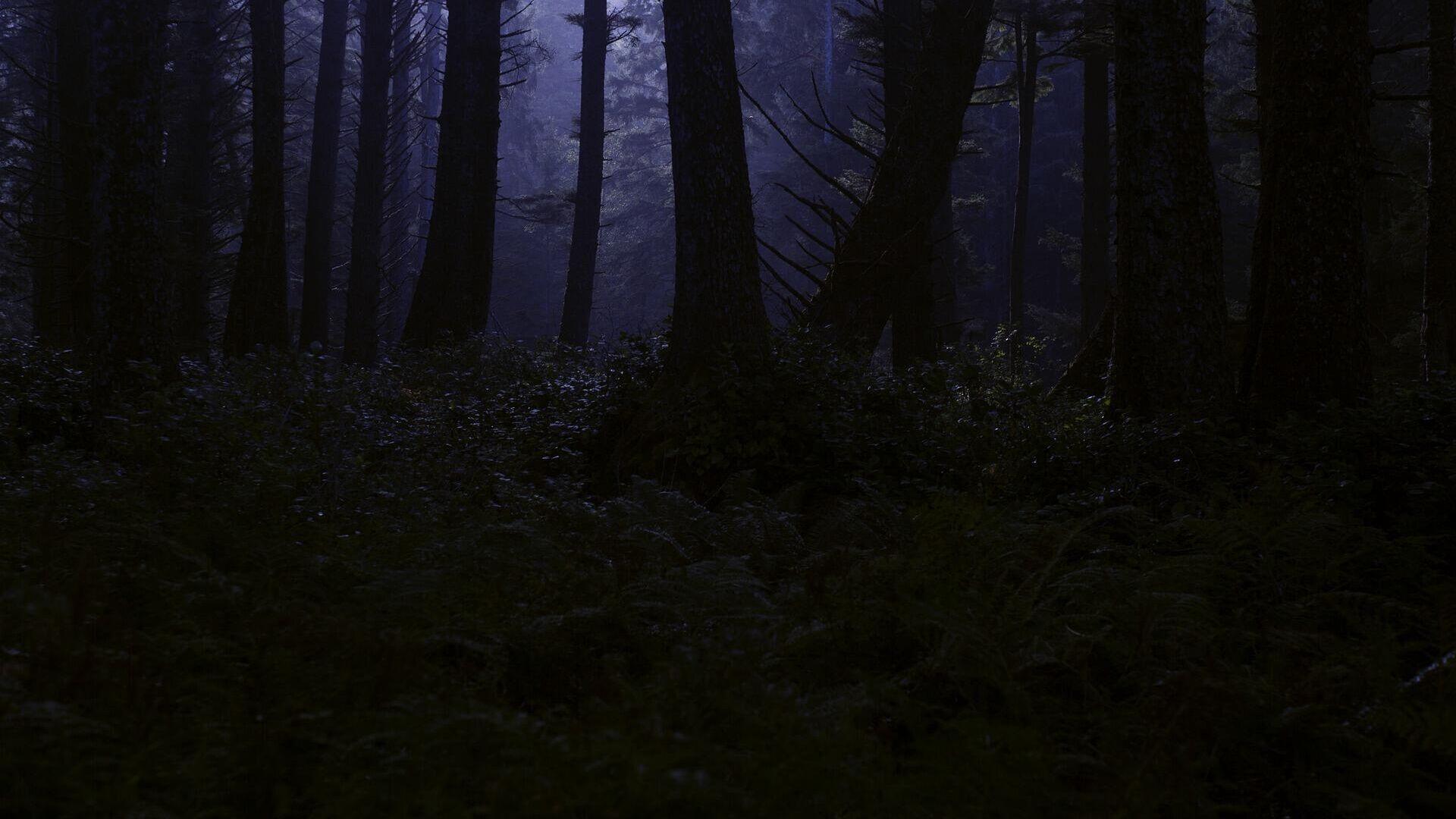 Ночной лес, архивное фото - Sputnik Беларусь, 1920, 24.09.2021