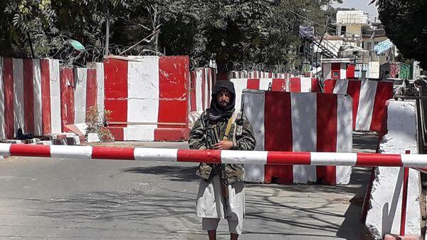 Боец Талибана стоит на страже в Газни - Sputnik Беларусь