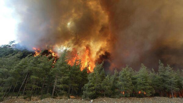 Лесные пожары в Турции - Sputnik Беларусь