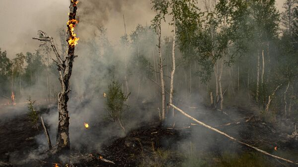 Тушение лесных пожаров в Якутии - Sputnik Беларусь