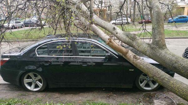 Дерево упало на машину после непогоды в Беларуси - Sputnik Беларусь