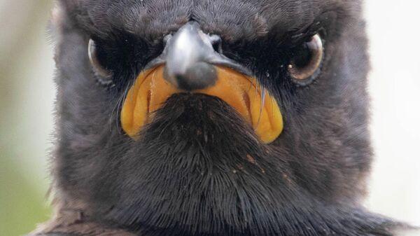 Самые смешные фотографии животных The Comedy Wildlife - Sputnik Беларусь