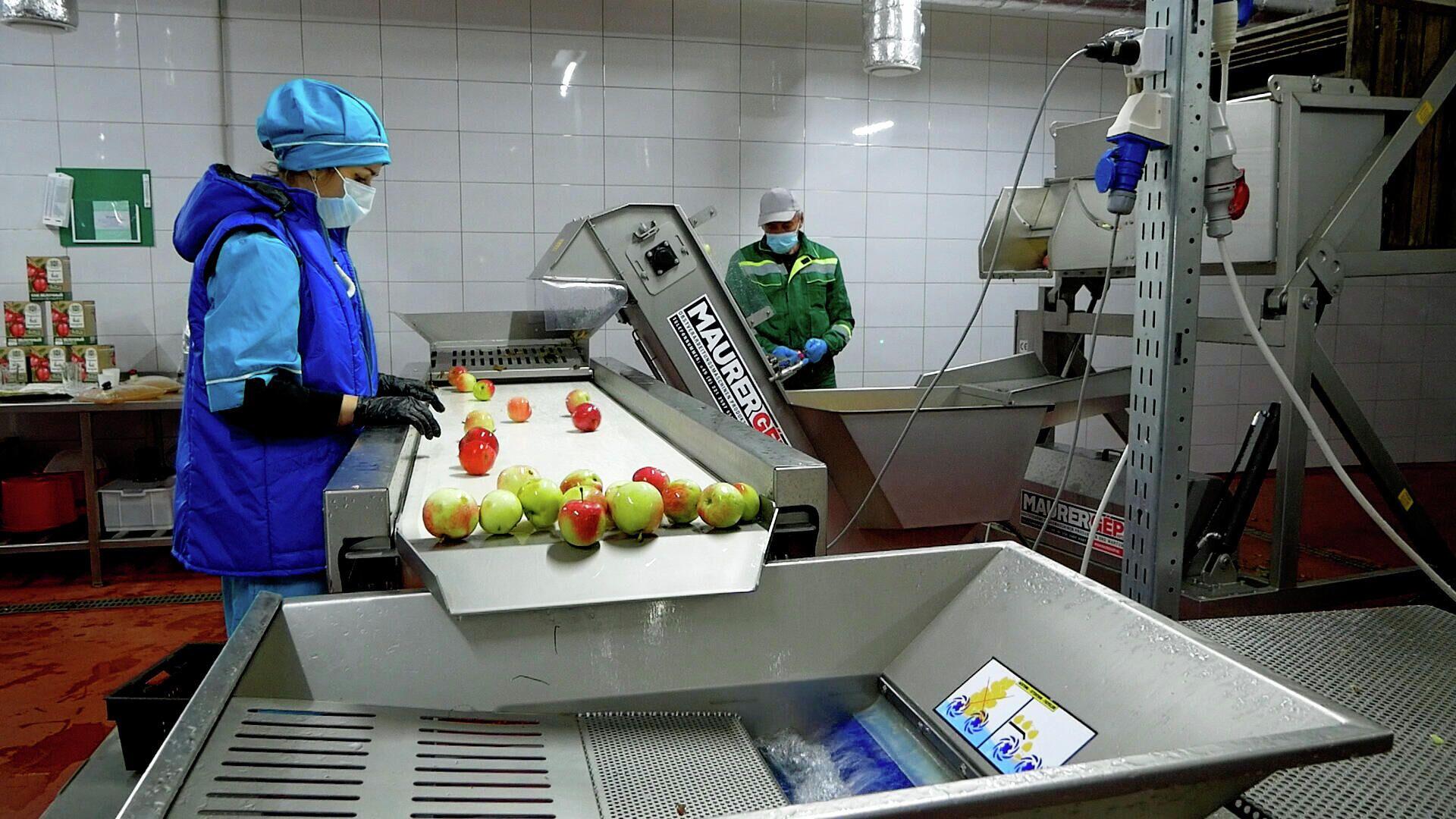 Цех по переработке яблок - Sputnik Беларусь, 1920, 08.09.2021