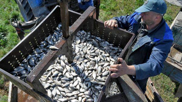 Первый улов без долгов: как живет белорусское рыбное хозяйство – видео  - Sputnik Беларусь