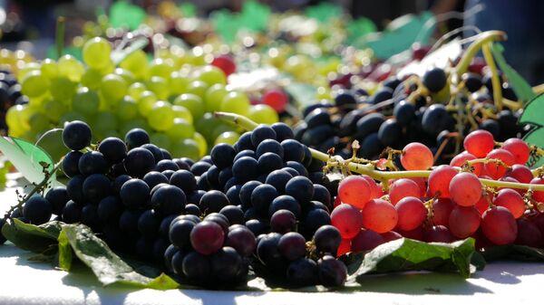 Выращивание винограда в Беларуси - Sputnik Беларусь
