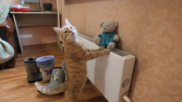 Кошка у батареи - Sputnik Беларусь
