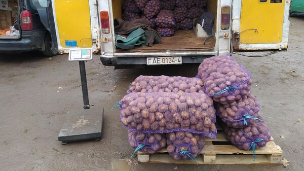 Картофель на сезонном рынке - Sputnik Беларусь