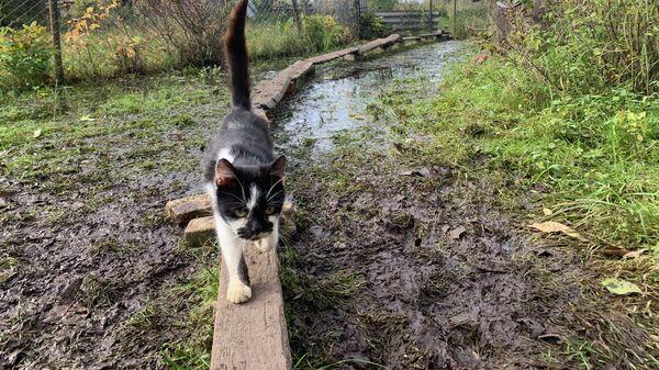 Жизнь на воде: в поселке под Гродно потоп - Sputnik Беларусь