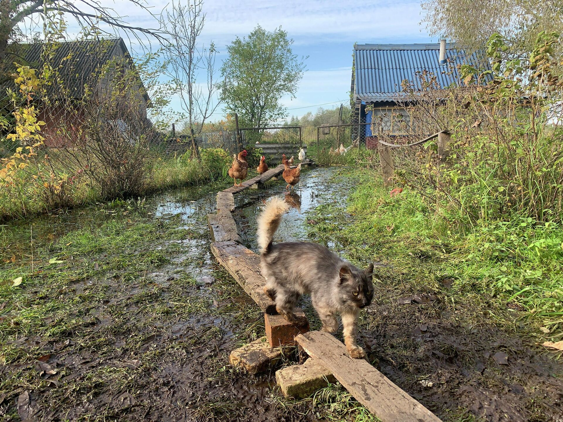 Пока во дворе не было мостиков, даже котам приходилось перемещаться вплавь - Sputnik Беларусь, 1920, 06.10.2021