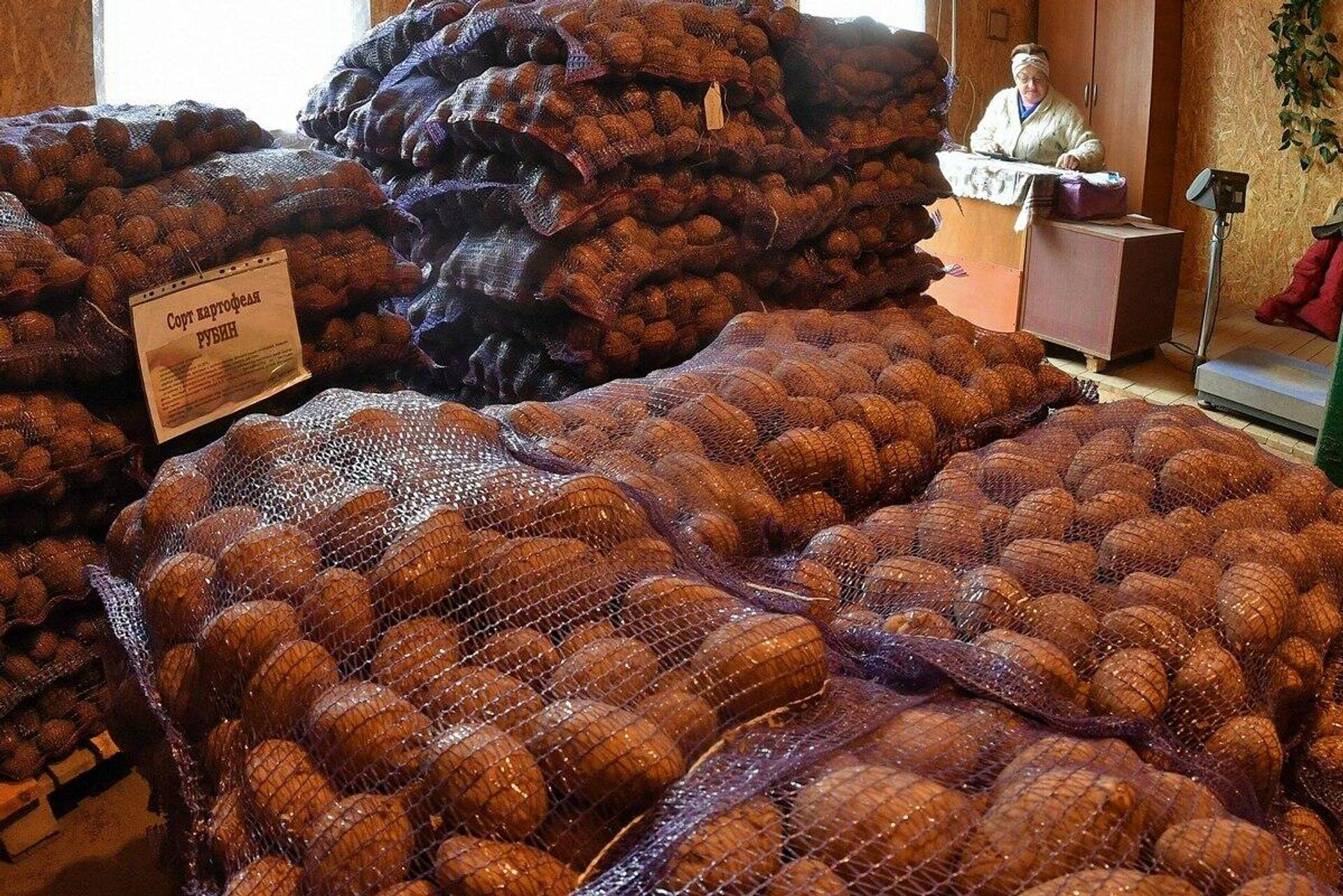 Чем дольше хранится такая картошка - тем больше в ней накапливаются редуцирующие сахара - Sputnik Беларусь, 1920, 07.10.2021
