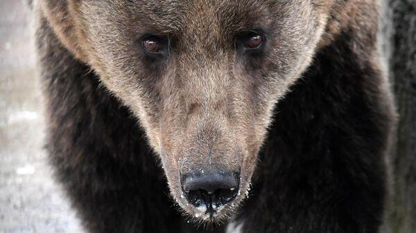 Медведь - Sputnik Беларусь