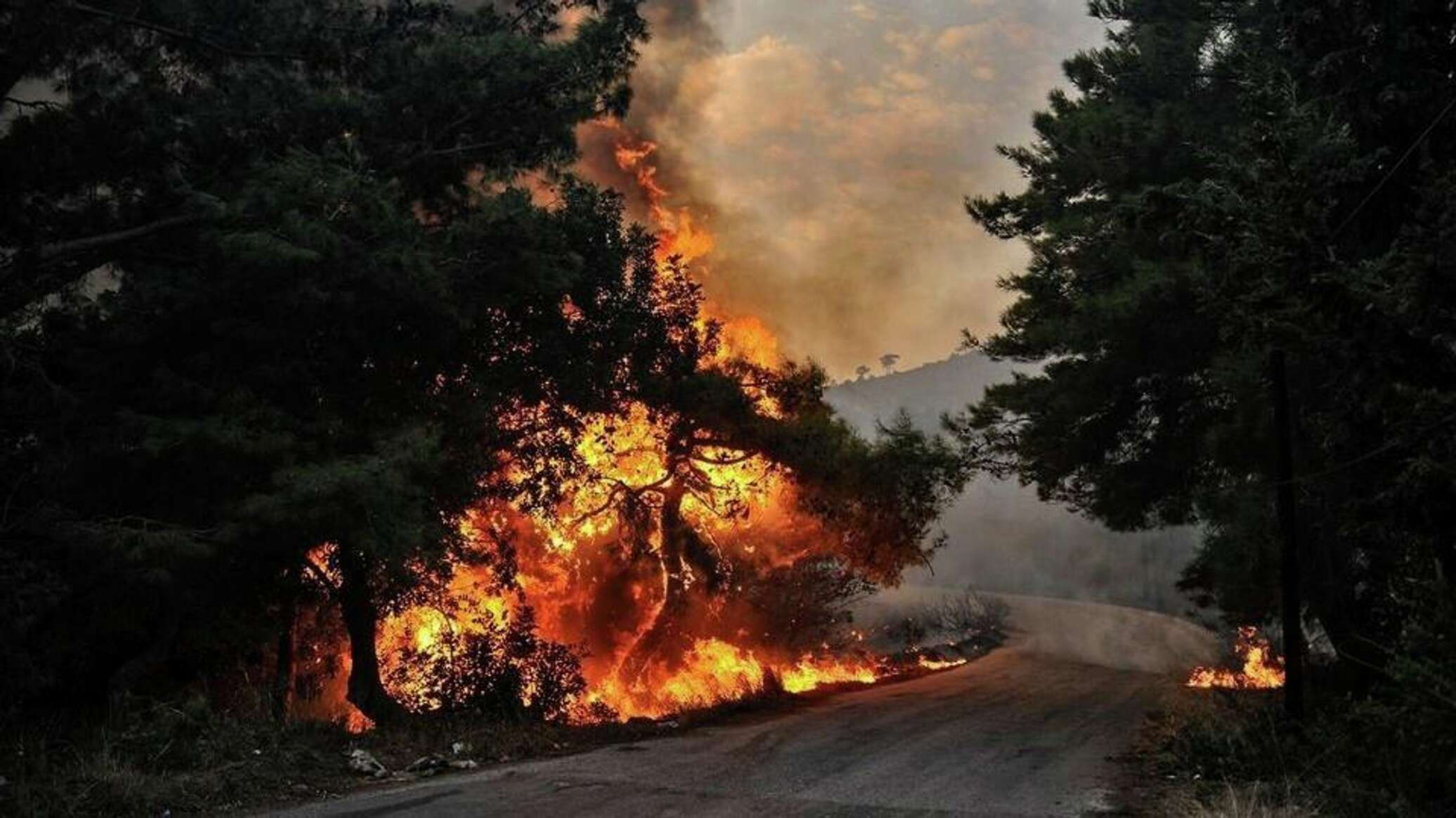 В Сирии казнили 24 поджигателей лесов