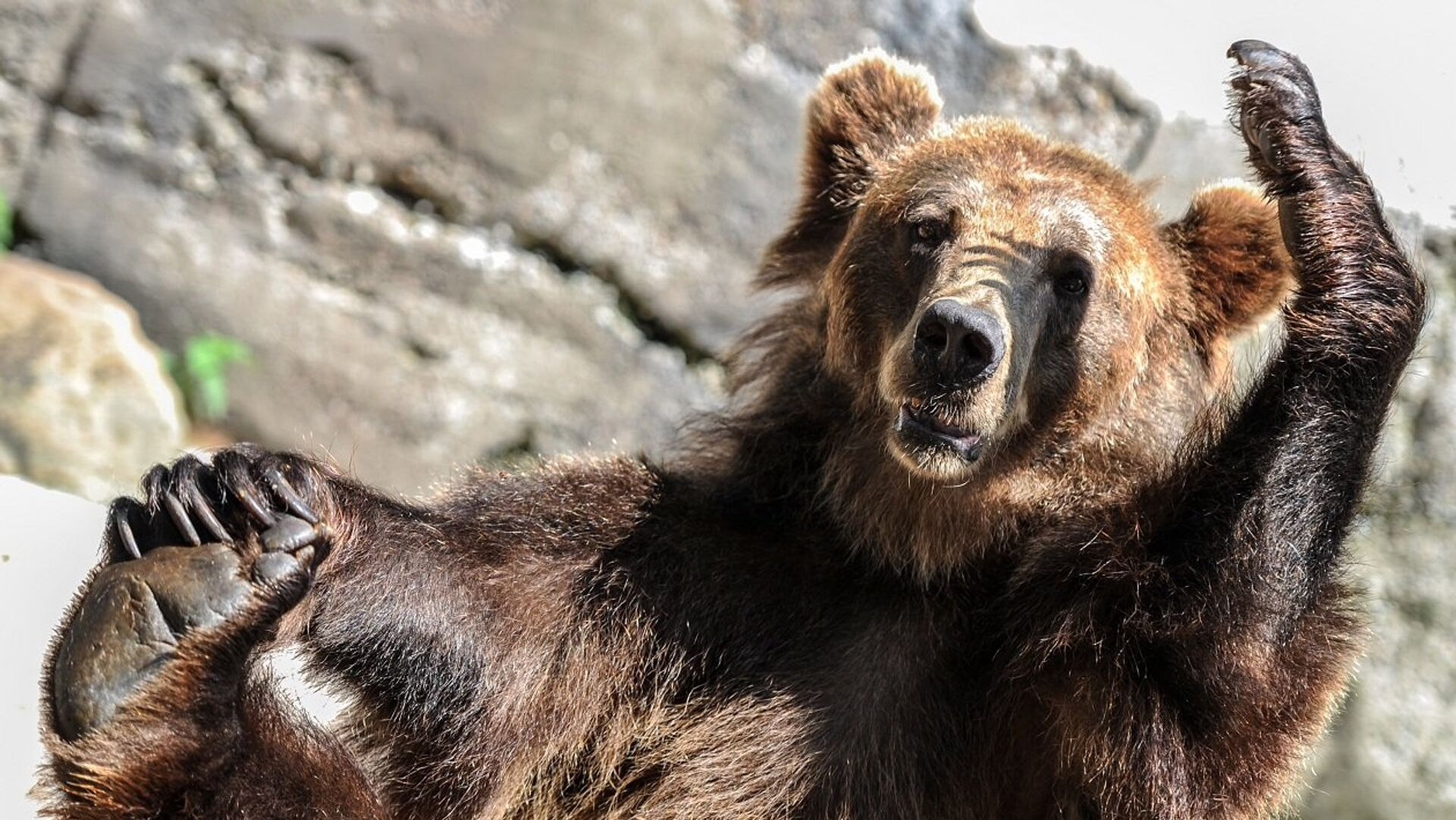 Бурый медведь, архивное фото - Sputnik Беларусь, 1920, 12.07.2021