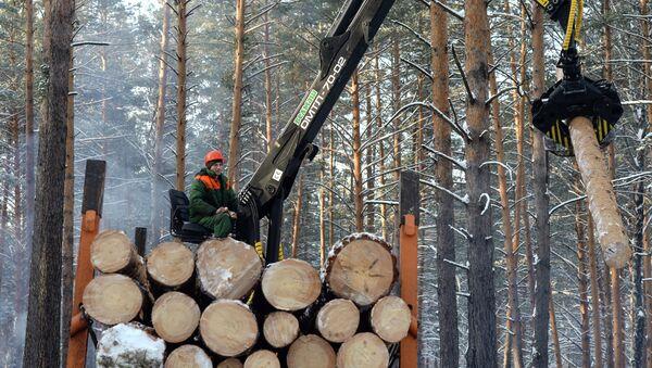 Заготовка леса, архивное фото - Sputnik Беларусь