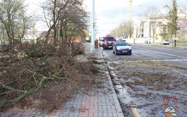 Поваленные в результате сильного ветра деревья в Бресте - Sputnik Беларусь