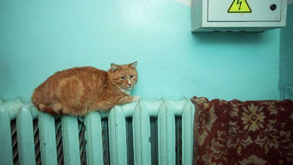 Кот на радиаторе отопления - Sputnik Беларусь