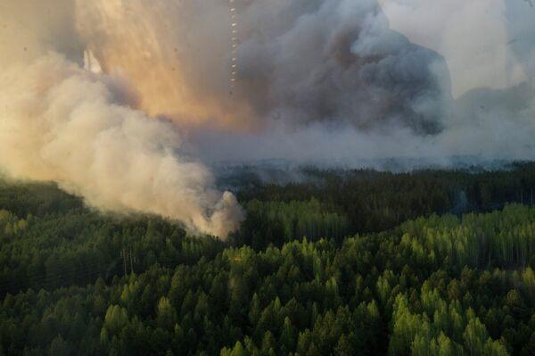 Пажар у зоне адчужэння ЧАЭС - Sputnik Беларусь