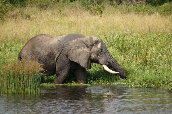 Слон на сафари - Sputnik Беларусь