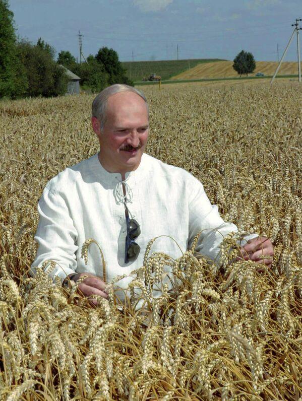 Ничто так не радует президента, как хороший урожай зерновых. Александр Лукашенко во время посещения сельскохозяйственного производственного кооператива Октябрь-Гродно Гродненского района в августе 2005-го. - Sputnik Беларусь