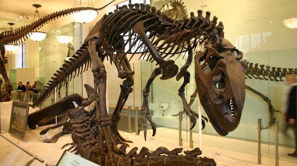 Скелет аллозавра в музее - Sputnik Беларусь
