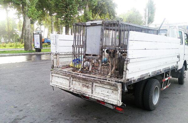 Бродячие собаки - Sputnik Беларусь