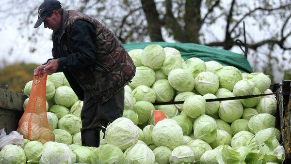 Мужчина продает капусту на сельскохозяйственной ярмарке - Sputnik Беларусь