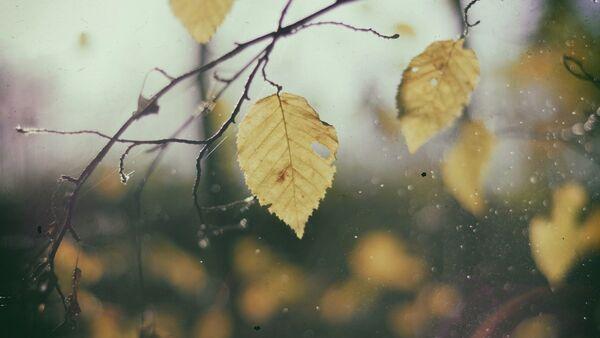 Осенний дождь - Sputnik Беларусь