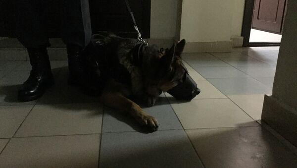 Собака Прима. Конвой обвиняемых осуществляется с собакой - Sputnik Беларусь