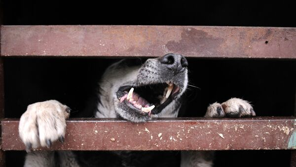 Злая собака, архивное фото - Sputnik Беларусь
