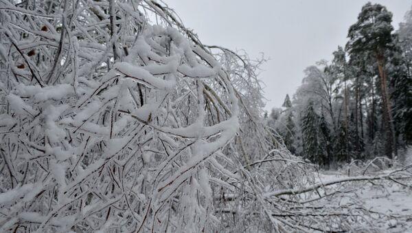 Ледяной дождь в Беларуси - Sputnik Беларусь