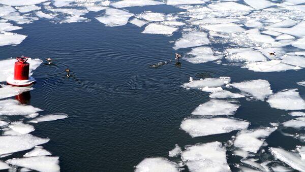 Ледоход на реке - Sputnik Беларусь