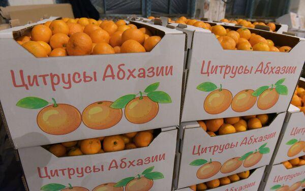 Збор мандарынаў у Абхазіі - Sputnik Беларусь