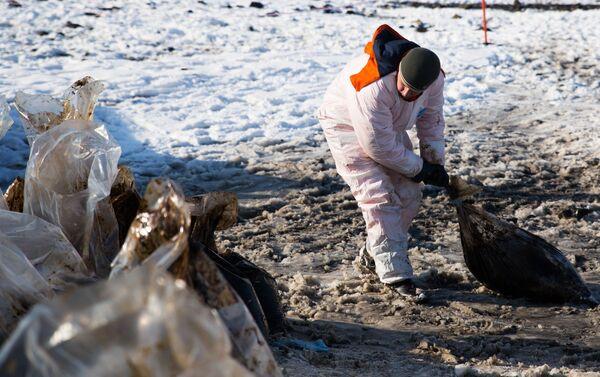На Сахалине спасают птиц после нефтяного разлива - Sputnik Беларусь