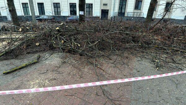 Вырубка деревьев в Минске, архивное фото - Sputnik Беларусь